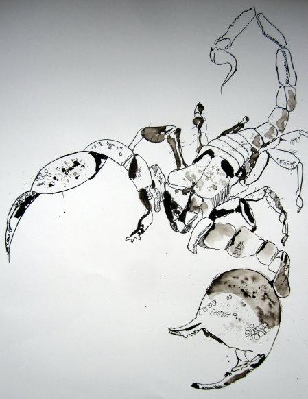 Entstehung Skorpion - Zeichnung von Susanne Haun - 56 x 76 cm - Tusche auf Lana Bütten 185 g satiniert