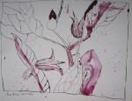 Klematis - Zeichnung von Susanne Haun - 26 x 32 cm - Tusche auf Lana 185 g satiniert