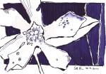 Blauviolette Blume - Zeichnung von Susanne Haun - Tusche auf Bütten - 15 x 10 cm auf Hahnemühle Bütten