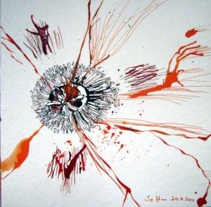 Mohn - Zeichnung von Susanne Haun - 20 x 20 cm - Tusche auf Bütten