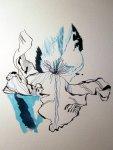 Entstehung der Zeichnung Lilie von Susanne Haun