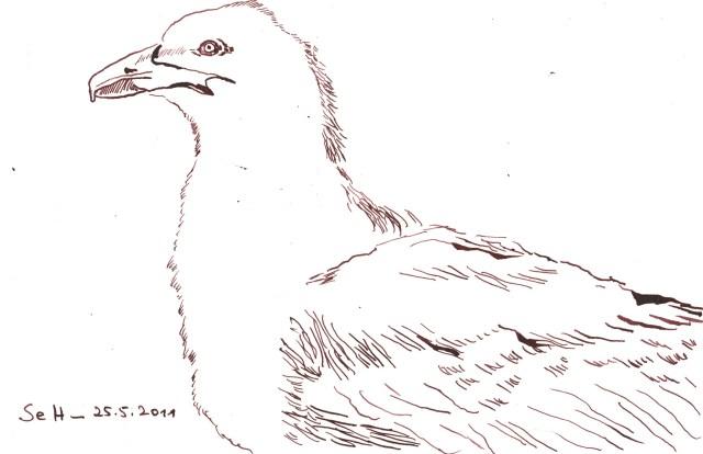 Möwe 2 - Zeichnung von Susanne Haun - 17 x 17 cm - Tusche auf Bütten