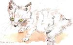 Kleine Katze unter dem Tisch - Zeichnung von Susanne Haun - 18 x 26 cm - Tusche auf Bütten