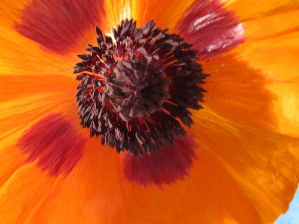 Ich kann es immer noch nicht glauben, was aus der geschlossenen Blüte hervorgekommen ist - Foto von Susanne Haun