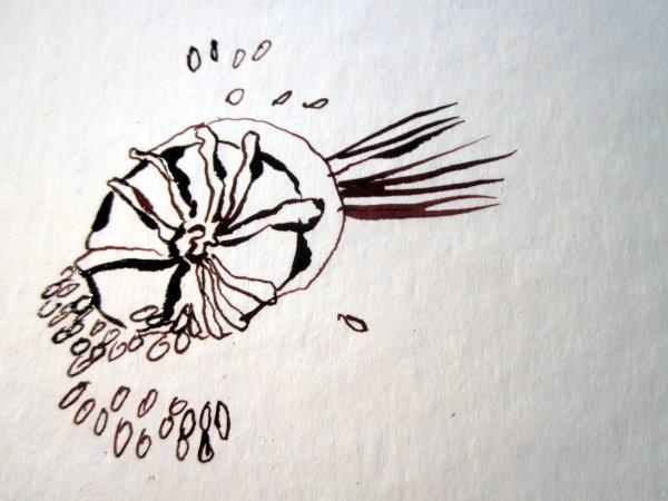 Ihr wißt, ich bin ein Freund der Linie - Zeichnung von Susanne Haun