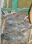 Passen die fünf noch ins Nest? - Susanne Haun