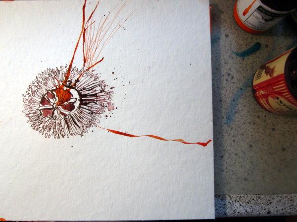 Entstehung Zeichnung Mohn von Susanne Haun