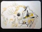 Amsel 3 - Zeichnung von Susanne Haun - 10 x 15 cm - Tusche auf Hahnemühle Bütten