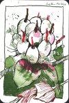 Himbeerfrucht - Zeichnung von Susanne Haun - 15 x 10 cm - Tusche auf Bütten