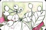 Wachholder - Zeichnung von Susanne Haun - 15 x 10 cm - Tusche auf Bütten