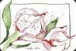 Himbeerblüte - Zeichnung von Susanne Haun - 15 x 10 cm - Tusche auf Bütten