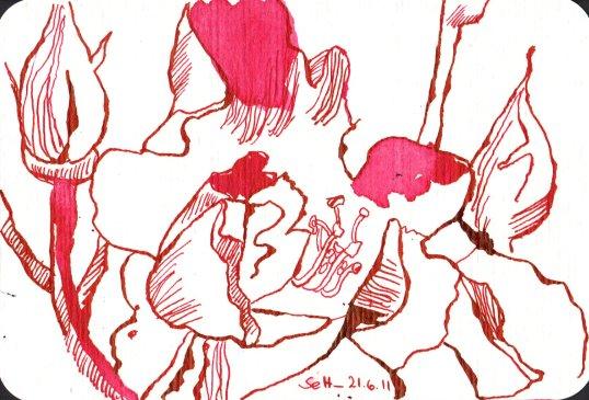 Rosen - Zeichnung von Susanne Haun - 10 x 15 cm - Tusche auf Bütten