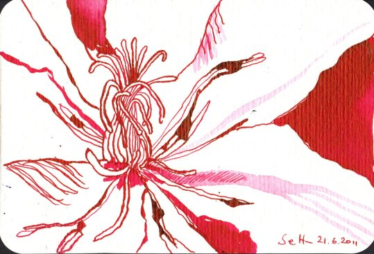 Klematis - Zeichnung von Susanne Haun - 10 x 15 cm - Tusche auf Bütten