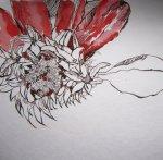 Entstehung rote Blume, Zeichnung von Susanne Haun