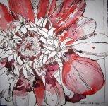 Rote Blume - Zeichnung von Susanne Haun - 30 x 30 cm - Tusche auf Bütteh