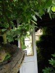 Mitten zwischen den Pflanzen steht eine Tür mit Spiegel - Foto von Martina Mattern