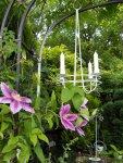 Kronleuchter zusammen mit der Klematis im Garten geben ein romantisches Bild - Foto von Martina Mattern