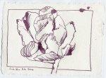 Tulpe in Carput mortuum - Zeichnung von Susanne Haun - 15 x 20 cm - Tusche auf Bütten