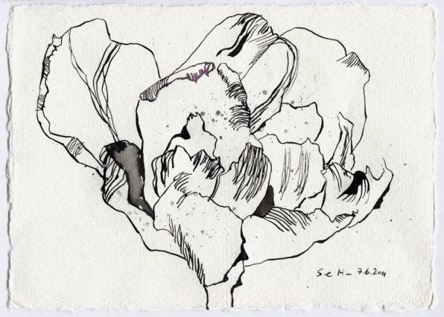 Tulpe in Schwarz - Zeichnung von Susanne Haun - 15 x 20 cm - Tusche auf Bütten