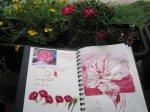 Als erstes zeichnete ich meine Balkon-Nelken in das Scetchbook - Foto von Susanne Haun