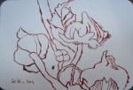 Stockrosen Version 2 - Zeichnung von Susanne Haun - 15 x 10 cm - Tusche auf Hahnemühle - Bütten