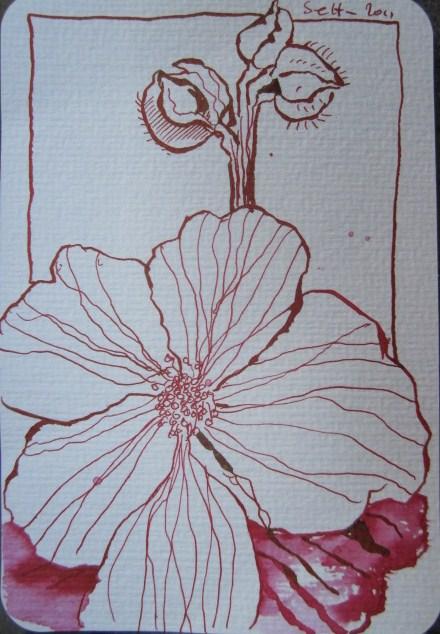 Stockrosen Version 3 - Zeichnung von Susanne Haun - 15 x 10 cm - Tusche auf Hahnemühle - Bütten