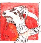 Capricornus - Zeichnung von Susanne Haun - 20 x 20 cm - Tusche auf Bütten