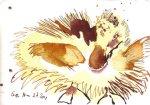 Entenkind 3 - Zeichnung von Susanne Haun - 10 x 15 cm - Tusche auf Bütten