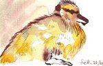 Entenkind 4 - Zeichnung von Susanne Haun - 10 x 15 cm - Tusche auf Bütten