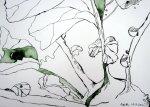Kohlrabi Vers. 2 - Zeichnung von Susanne Haun - 17 x 22 cm - Tusche auf Bütten