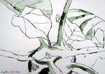 Kohlrabi Vers. 1 - Zeichnung von Susanne Haun - 17 x 22 cm - Tusche auf Bütten