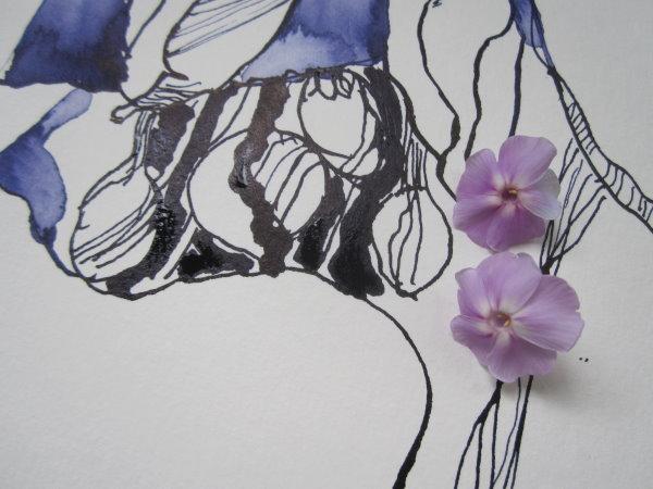 Im laufe des Tages fallen auch immer mehr Blüten ab - ich bewege den Phlox beim Betrachten zu viel - Ausschnitt Zeichnung von Susanne Haun