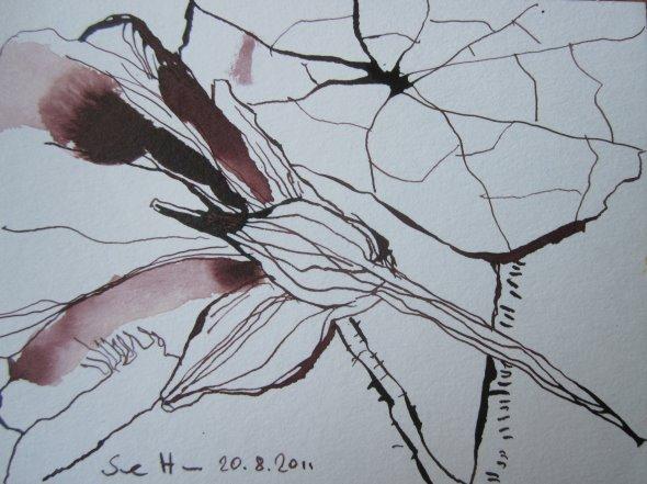 Kapuzinerkressse Caput mortuum - Zeichnung von Susanne Haun - 12 x 17 cm - Tusche auf Bütten