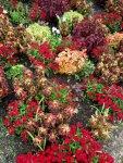 Mit Pflanzen malen - Foto von Susanne Haun