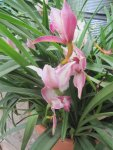Im Gewächshaus wachsen die Orchideen - Foto von Susanne Haun