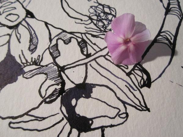Wie klein ist der Phlox gegenüber der Zeichnung - Ausschnitt Zeichnung von Susanne Haun