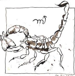 Skorpion - Zeichnung von Susanne Haun - 20 x 20 cm - Tusche auf Bütten