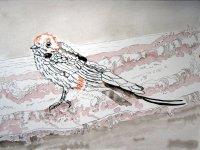 Seinen Namen hat er davon, dass er wie eine Schwalbe oder wie ein Wiesel auf dem Meer umherläuft - Zeichnung von Susanne Haun