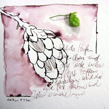 Wilder Hopfen - Zeichnung von Susanne Haun - 20 x 20 cm - Tusche von auf Bütten