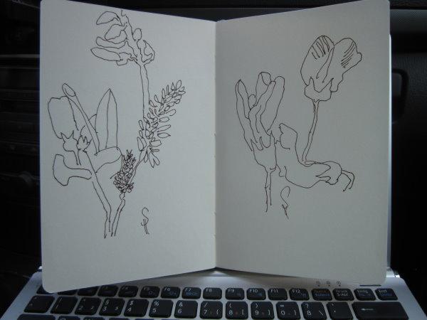 Raps - Skizze von Susanne Haun