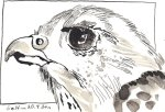 Vogelkopf - Zeichnung von Susanne Haun - Tusche auf Bütten - 10 x 15 cm