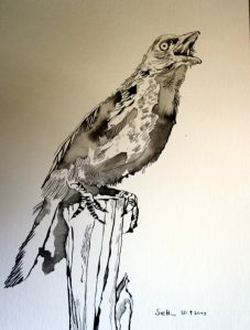 Krähe - Zeichnung von Susanne Haun - 34 x 22 cm - Tusche auf Bütten