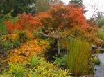 Die roten Bätter der Bäume geben einen guten Kontrast zum gelben Herbstlaub - Foto von Susanne Haun