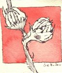 Hibiskus Vers. 3 - Zeichnung von Susanne Haun - Tusche auf Silberburg - 10 x 10 cm
