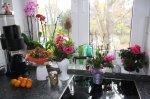 Ein Teil der Blumen steht in meine Küche - Foto von Susanne Haun