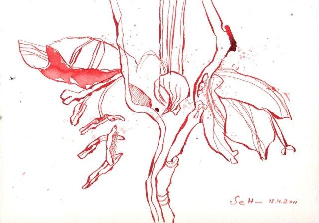 Amaryllis - Zeichnung von Susanne Haun - 17 x 22 cm - Tusche auf Bütten