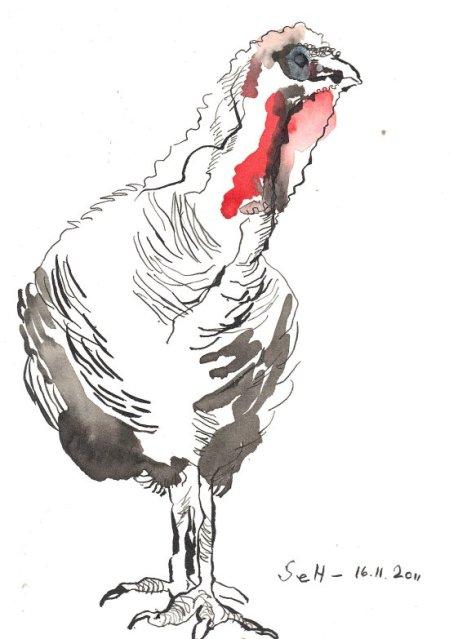 Truthahn - Zeichnung von Susanne Haun 17 x 22 cm - Tusche auf Burgund Bütten