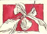 Amaryllis 2 - Zeichnung von Susanne Haun - 7,5 x 10,5 cm - Tusche auf Bütten
