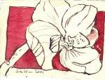 Orchidee - Zeichnung von Susanne Haun - 7,5 x 10,5 cm - Tusche auf Bütten