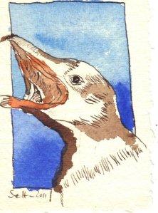Pinguin blau Nr. 3 - Zeichnung von Susanne Haun - Tusche auf Bütten - 11 x 7,5